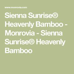 Sienna Sunrise® Heavenly Bamboo - Monrovia - Sienna Sunrise® Heavenly Bamboo