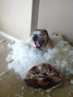 hahahahahaha that is something that my jack russell would do haha