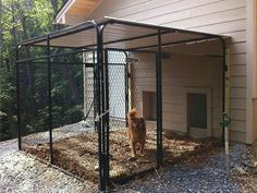 Terrific Photos Top 5 Outdoor Dog Kennels Designed For Your Dogs Safety. Terrific Photos Top 5 Outdoor Dog Kennels Designed For Your Dogs Safety. Diy Indoor Dog Kennel P…