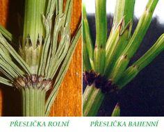 Web plný bylinek. Celery, Asparagus, Vegetables, Plants, Food, Biology, Studs, Essen, Vegetable Recipes