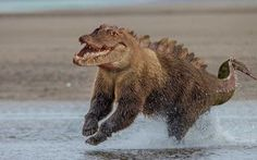 Crocobear #hybrid #animal #weird