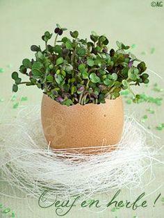 Idée déco pour la table de Pâques ! Et pour mieux connaître cette fête, c'est par ici : http://www.very-utile.com/fete-paques.php: