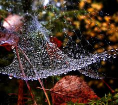 dew laden web