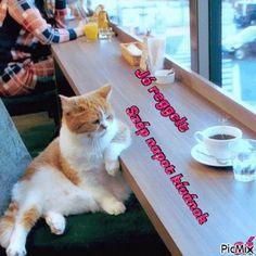 Facebook, Cats, Animals, Gatos, Animales, Animaux, Animal, Cat, Animais