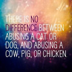 vegan: there is no difference between abusing a cat or dog, and abusing a cow, pig or chicken.
