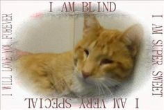 Meet Cheddar! This sweet boy is blind, but loves to explore and check out his surroundings with his other senses. Adopt him at the MHS Detroit Center for Animal Care. Wish I could adopt this sweetie!