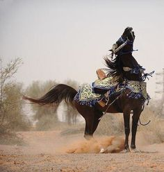 Prince of the desert