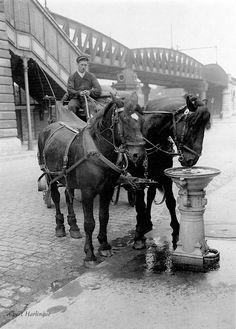 Drinking trough for horses. Paris, 1900 - Photo of Albert Harlingue Vintage Pictures, Antique Photos, Vintage Photographs, Old Pictures, Old Photos, Louis Daguerre, Paris 1900, Paris France, Rue Blondel