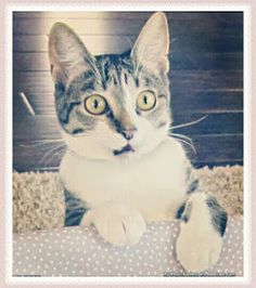 Sweet Cats at Home Images Cute Animals Images, Cats, Sweet, Candy, Gatos, Cat, Kitty, Kitty Cats