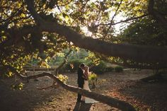 Oak Tree Wedding Photos