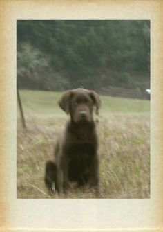 Muddy as a pup, on Muddy Hill. ©Katherine Dunn of Apifera Farm http://www.katherinedunn.us