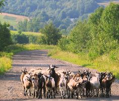 Bieszczady to miejsce gdzie natura jest na pierwszym miejscu http://salvadofotografia.blogspot.com/2013/09/moje-podroze-po-ukochanej-polsce.html