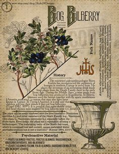 Magic Herbs, Herbal Magic, Grimoire Book, Poisonous Plants, Wiccan Spells, Book Of Shadows, Tarot, Herbalism, Alchemy