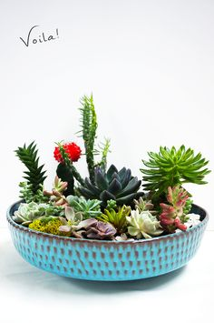 This DIY succulent garden is simple to recreate and will last through the season. #BHGSummer