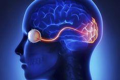 Cómo el cerebro humano percibe el mundo en 3D