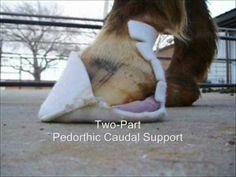 Hoof Treatment Videos