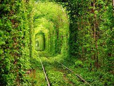 Tout vert, où va donc ce tunnel?