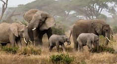 East Africa Wildlife Safaris