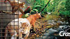 Multa de crime ambiental é revertida para cuidados de animais silvestres