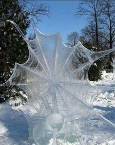 Ice web and spider