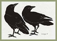 I've always loved this image of the crows as mates.  they are strong and independent, yet mates. #alignedvision