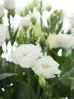 Welche Blumen gibt es im September? Schnittblumen Saison-Kalender | Blumigo