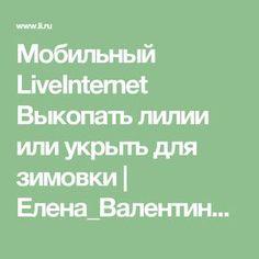 Мобильный LiveInternet Выкопать лилии или укрыть для зимовки | Елена_Валентиновна - Дневник Елена_Валентиновна |