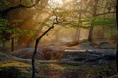 Forest of Fontainebleau, France