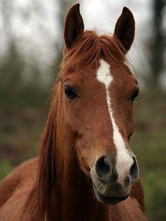 "** HORSE: ""If dey starts singin' ' Mr. Ed '  again; me be gonna rip meez shoe off me hoof and kicks it atz em."""