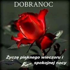OBRAZKI HELENKI: MIŁEGO WIECZORU Good Night, Rose, Flowers, Pictures, Board, Stained Glass Windows, Photos, Plants, Colors