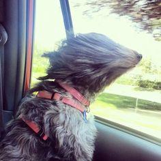 Amo los paseos en auto