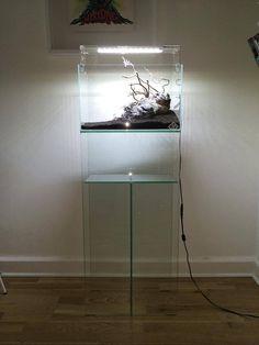 Cool Facebook Covers, Aquarium Stand, Cichlids, Freshwater Aquarium, Fish Tank, Fresh Water, Aquascaping, Terrariums, Lighting