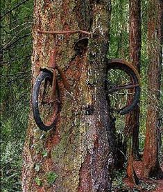Old Bicycle Inside A Living Tree. This beautiful image gives an idea of what the world would look like if humans disappeared... Nature will make use of the remains of our culture, creating an organic theme park of decaying memories.