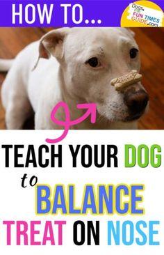 Dog Training Treats, Dog Training Videos, Best Dog Training, Dog Treats, Pet Dogs, Dogs And Puppies, Baby Puppies, Teach Dog Tricks, Dog Minding