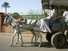 Egypt. Rode in a cart like this in Thebes along the Nile