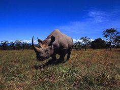 Great Wild Animal Photos | animals great definition wild nature rhino picture
