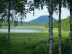Nature in Hälsingland