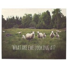 #photo - #Cute Fluffy White Sheep & lambs in pasture photo Jigsaw Puzzle