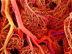 Blood Vessels. they also link to the theme of mapping.