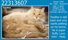 **Fort Worth, TX**CURRENT STATUS: Must be tagged for adoption or rescue by 9am on 04/18/14**  Reason for URGENT STATUS: UTI - Blood in Urine  Animal ID: 22313607 Name: Toodles Breed: DMH Sex: Male - Neutered Age: 5 years Weight: 9 lbs FULLY VETTED FIV/FeLV NEGATIVE