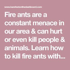 Fire ants are a constant menace in our area & can hurt or even kill people & animals. Learn how to kill fire ants without harsh chemicals & keep them away. Kill Fire Ants, It Hurts, Learning, People, Animals, Insects, Yard, Outdoors, Animais