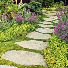 A carpet-like groundcover fills in between stepping stones along a path bordered by chartreuse sedum and purple-flowering catmint.