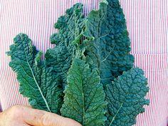 Cabbage Nero di Toscana (Lacinato Kale or Dinosaur Kale) | Baker Creek Heirloom Seed Co