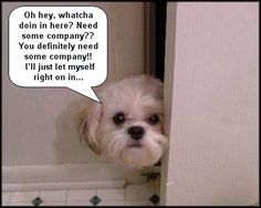 This would be my dog every time I go to the bathroom. :-P