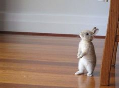This reminds me of Peter Rabbit...