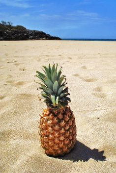 THE BEST PINEAPPLE in the WORLD, but you must eat it there, it tastes AMAZING. Maui Gold, pineapple in the sand, Maui, Hawaii