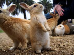Cute Baby Bunnies Hang Out With A Visitor To Rabbit Island In Japan | Bored Panda