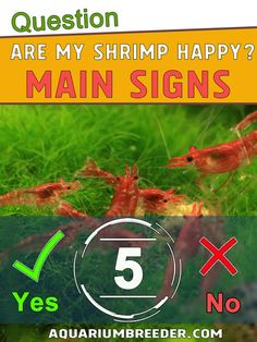 How Do I Know If My Shrimp are Happy? Shrimp Tank, Axolotl, Aquascaping, Snail, I Know, Cool Pictures, Fish, Happy, Pisces