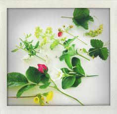 Flowers of June.
