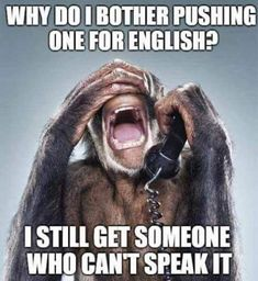 Monkey phone operator by Jill Greenberg Jill Greenberg, Jokes Pics, Funny Jokes, Hilarious, Sarcastic Humor, Sarcasm, Funny Animal Pictures, Funny Animals, Why Do I Bother